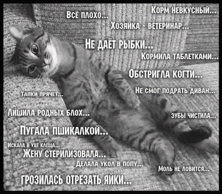 http://s5.uploads.ru/4R6gl.jpg