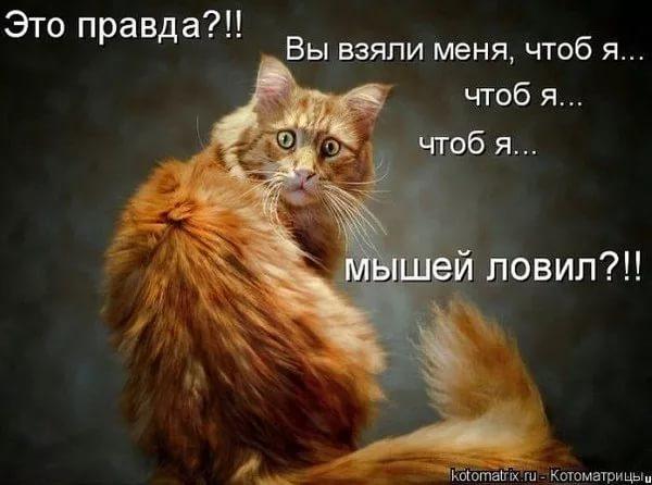 http://s5.uploads.ru/4sBW1.jpg