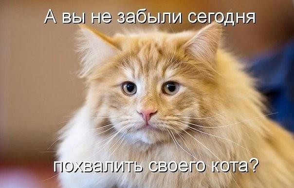 http://s5.uploads.ru/6y93B.jpg