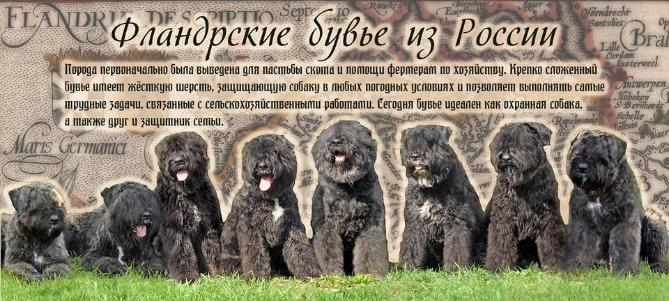http://s5.uploads.ru/9rp6u.jpg