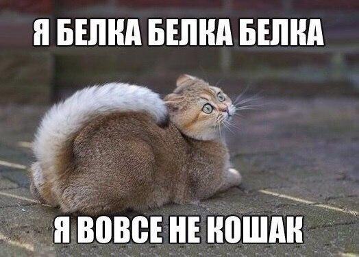 http://s5.uploads.ru/C1tE2.jpg