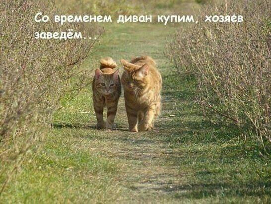 http://s5.uploads.ru/DaH7l.jpg