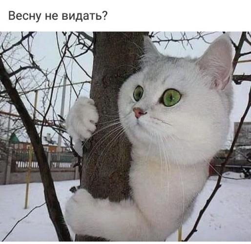 http://s5.uploads.ru/Erowa.jpg