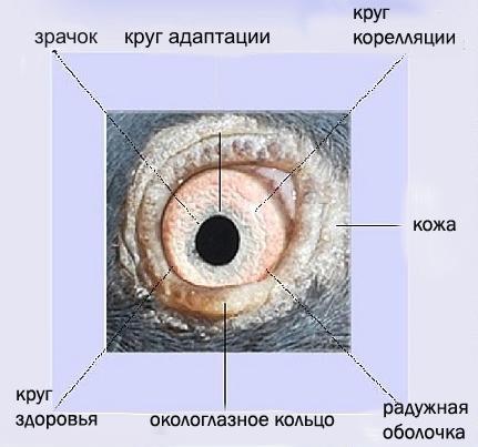 http://s5.uploads.ru/Fgyfr.jpg