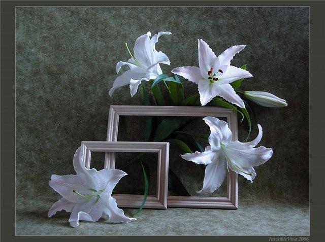 http://s5.uploads.ru/HNAgn.jpg