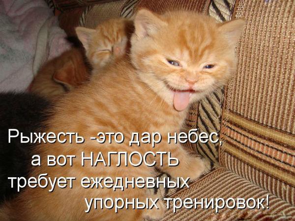 http://s5.uploads.ru/JP5Ry.jpg