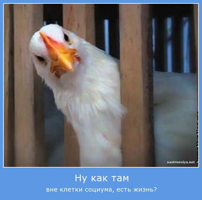 http://s5.uploads.ru/LCJkz.jpg