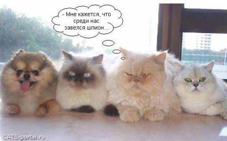 http://s5.uploads.ru/LUNMY.jpg
