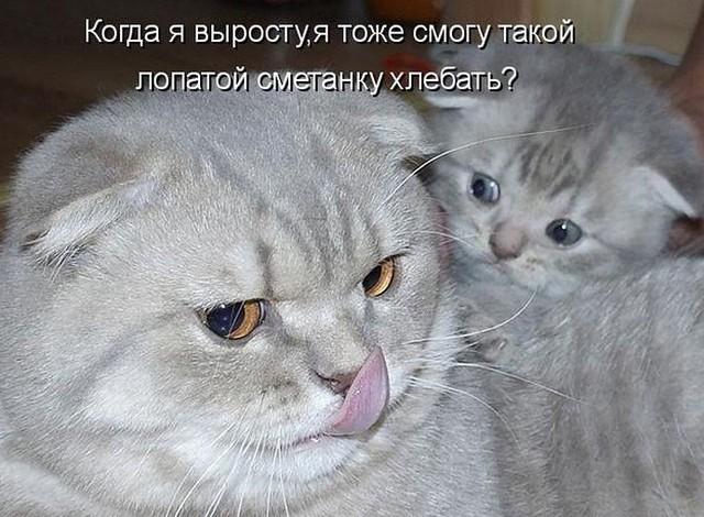 http://s5.uploads.ru/MUwoJ.jpg