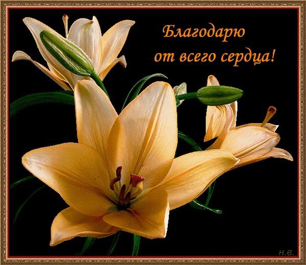 http://s5.uploads.ru/PKYxv.jpg