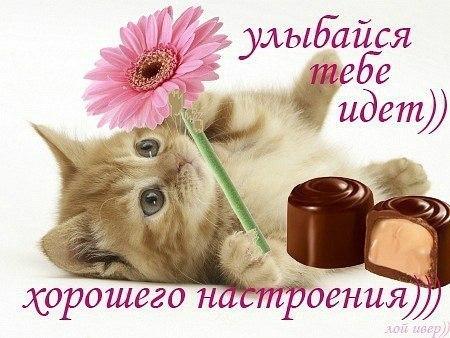 http://s5.uploads.ru/PdfmO.jpg