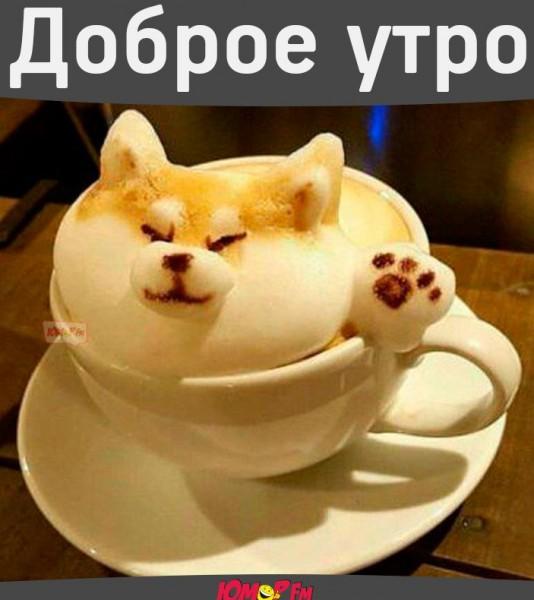 http://s5.uploads.ru/SirCs.jpg