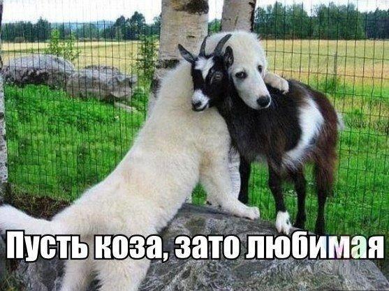 http://s5.uploads.ru/TXKVI.jpg