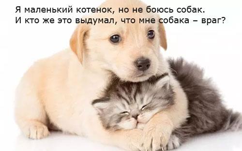 http://s5.uploads.ru/UK9t5.jpg