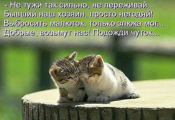 http://s5.uploads.ru/VcQ8J.jpg
