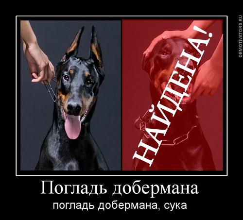 http://s5.uploads.ru/XuzMd.jpg