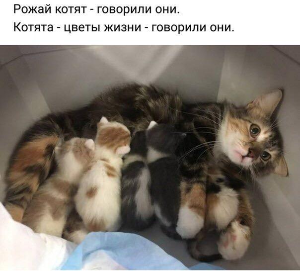 http://s5.uploads.ru/eipFJ.jpg