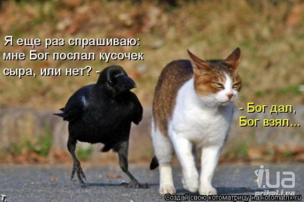 http://s5.uploads.ru/gU14w.jpg