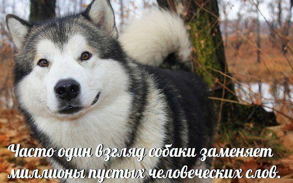 http://s5.uploads.ru/hH7Uv.jpg