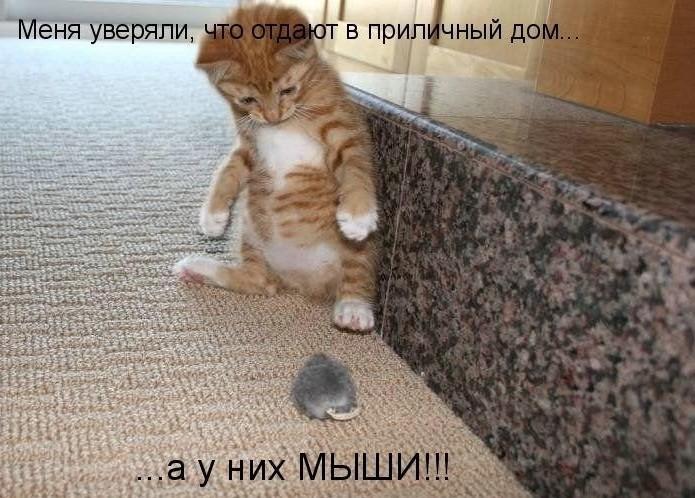 http://s5.uploads.ru/jsNVc.jpg
