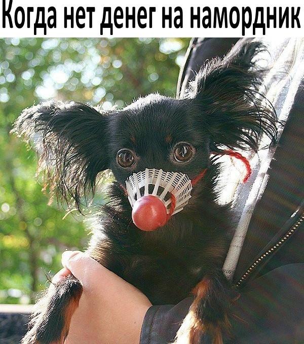http://s5.uploads.ru/lINGm.jpg