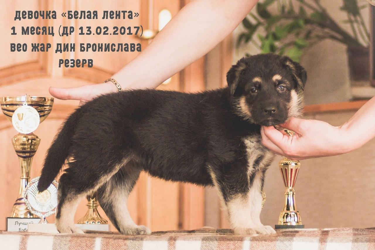 http://s5.uploads.ru/pxYTW.jpg