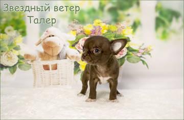 http://s5.uploads.ru/t/0Z6Ys.jpg