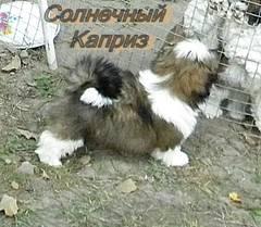 http://s5.uploads.ru/t/1nUES.jpg
