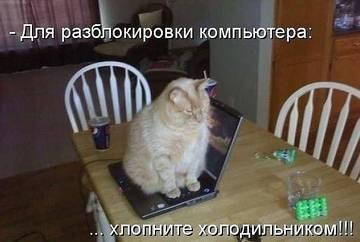 http://s5.uploads.ru/t/24Axp.jpg