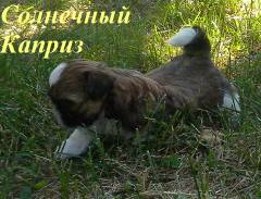 http://s5.uploads.ru/t/27wn0.jpg