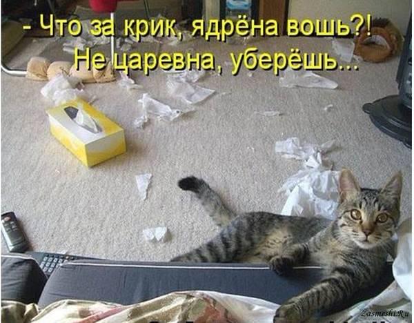 http://s5.uploads.ru/t/6o5jX.jpg