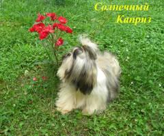 http://s5.uploads.ru/t/6oDY2.jpg