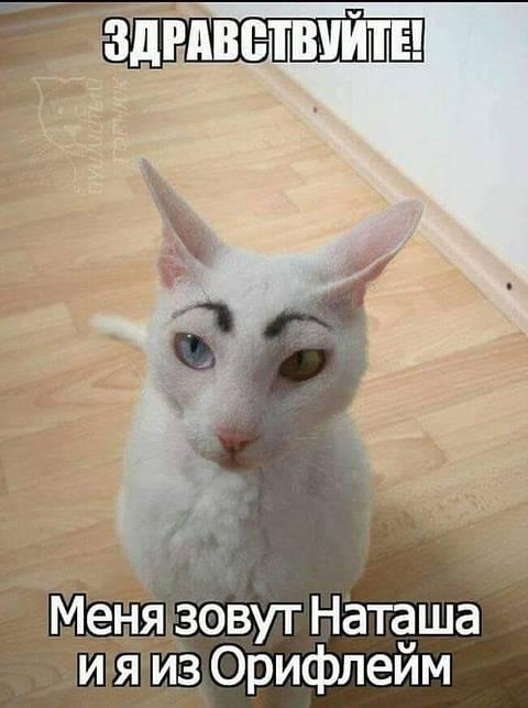 http://s5.uploads.ru/t/6xJvD.jpg
