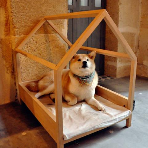 На самом деле дизайн собачьего