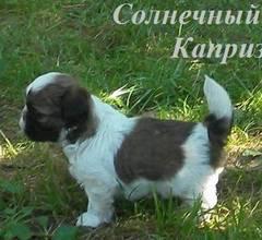 http://s5.uploads.ru/t/8HOmj.jpg