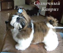 http://s5.uploads.ru/t/8q20d.jpg