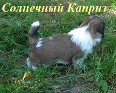http://s5.uploads.ru/t/9NJAW.jpg