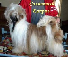 http://s5.uploads.ru/t/9UFyY.jpg