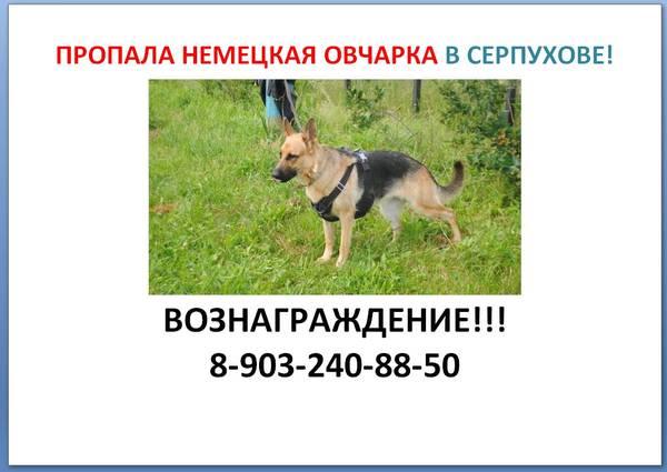 http://s5.uploads.ru/t/AF6kP.jpg