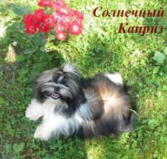 http://s5.uploads.ru/t/Acxid.jpg