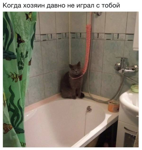 http://s5.uploads.ru/t/AsuSn.jpg
