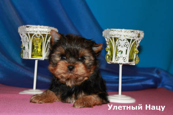 http://s5.uploads.ru/t/B1G06.jpg
