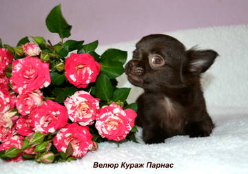 http://s5.uploads.ru/t/Bp8CG.jpg