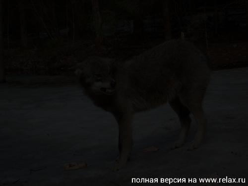http://s5.uploads.ru/t/Br4n6.jpg