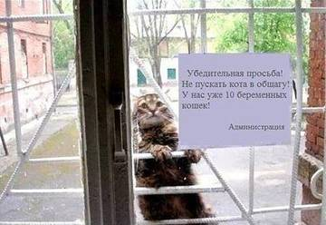 http://s5.uploads.ru/t/CbD5x.jpg