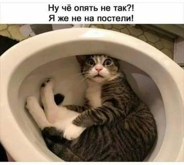 http://s5.uploads.ru/t/EXJ3R.jpg