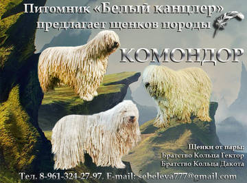 http://s5.uploads.ru/t/EehNn.jpg