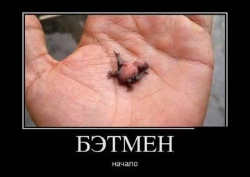 http://s5.uploads.ru/t/FTdRv.jpg