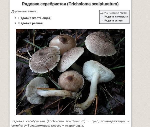http://s5.uploads.ru/t/FpNtJ.jpg