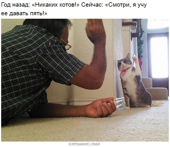 http://s5.uploads.ru/t/GUBFs.jpg